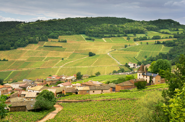 Bourgogne Weinberge in Solutre