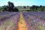 Lavendel Feld in Gard, Frankreich