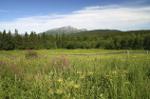 Sommerwiese Jamtland